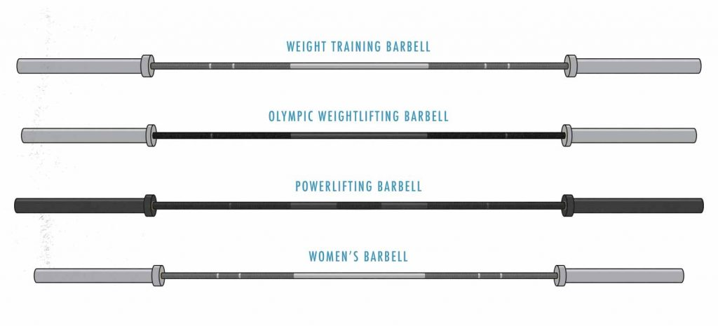 Illustration of a multipurpose barbell, olympic barbell, power barbell, and women's barbell.