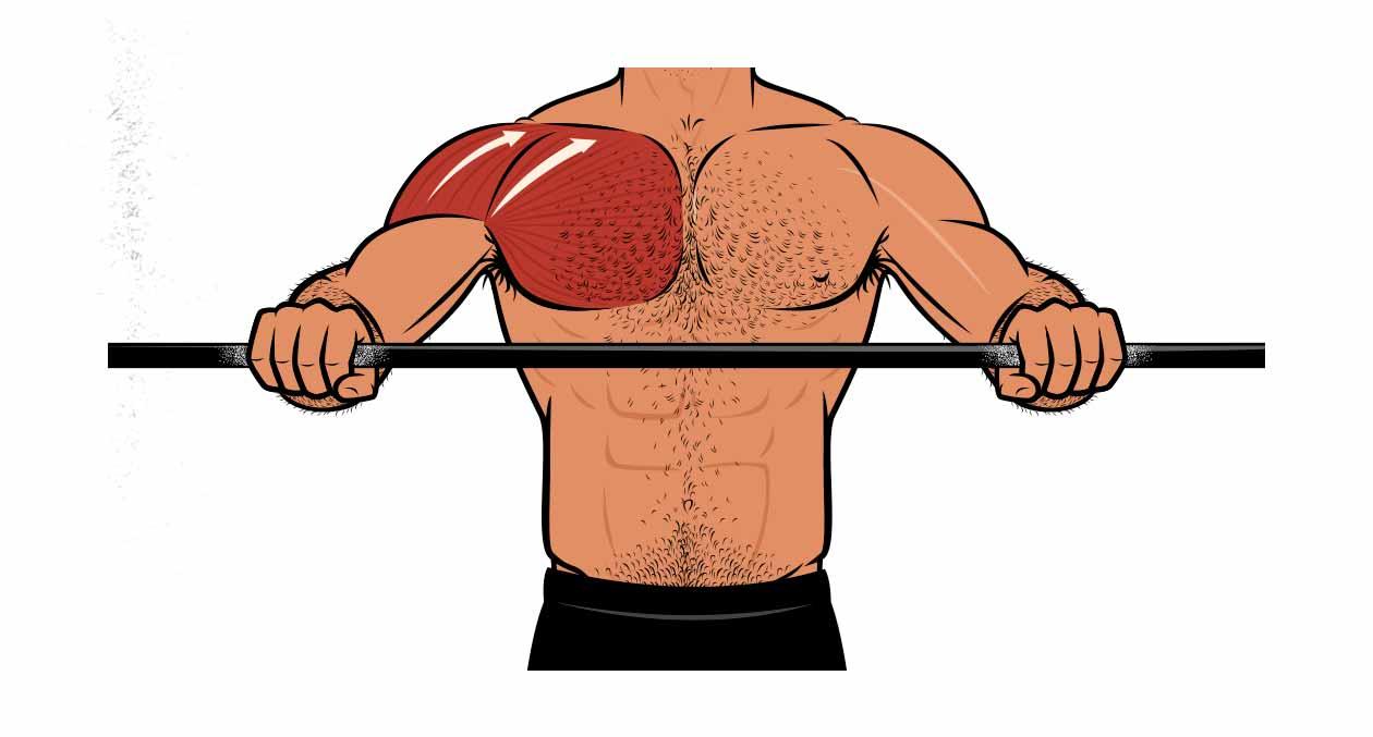 Ilustración que muestra que el press de banca con agarre cerrado trabaja a los músculos de los hombros y de la parte superior del pecho.