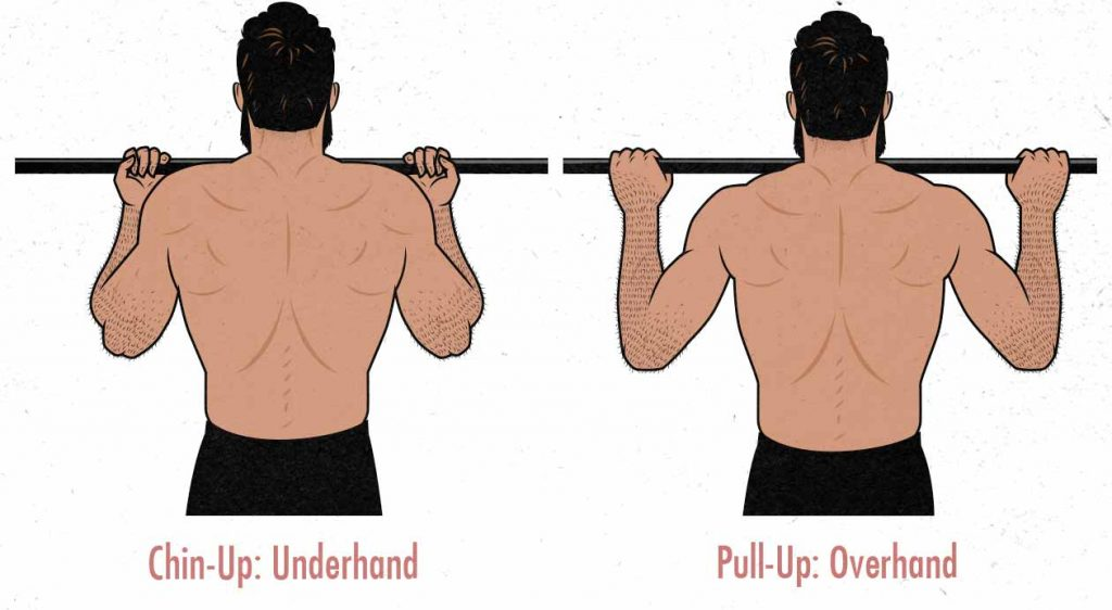 Illustration of the difference between chin-ups and pull-ups.