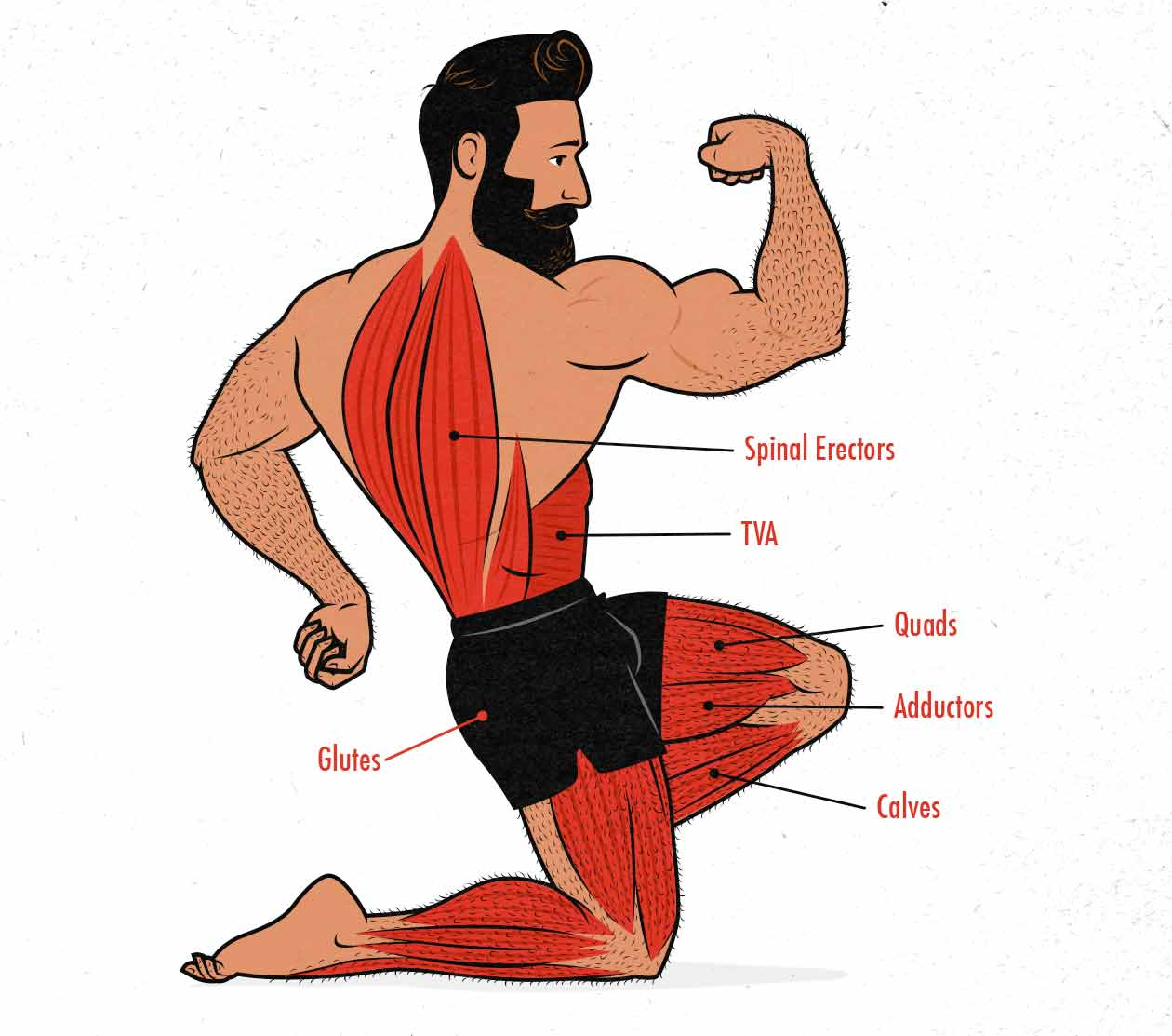 Muscles worked in the front squat illustration / diagram.