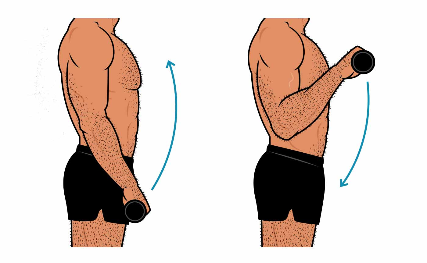 Illustration of a man doing a barbell reverse curl, the best forearm exercise for bulking up the brachioradialis.