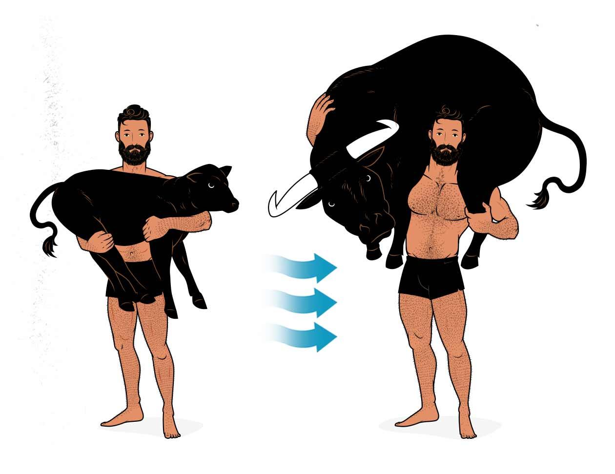 Ilustración de Milón de Crotona cargando a un novillo y luego a un toro adulto