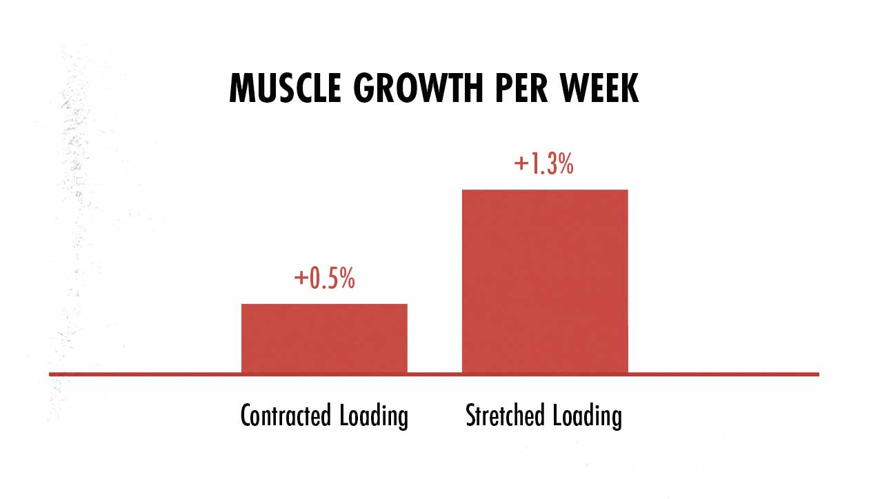 Graph showing how training at different muscle lengths stimulates different amounts of muscle growth.