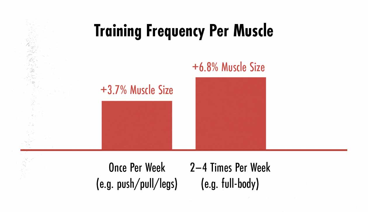 Graph showing that training a muscle 2–3 times per week stimulates more muscle growth than training a muscle once per week.