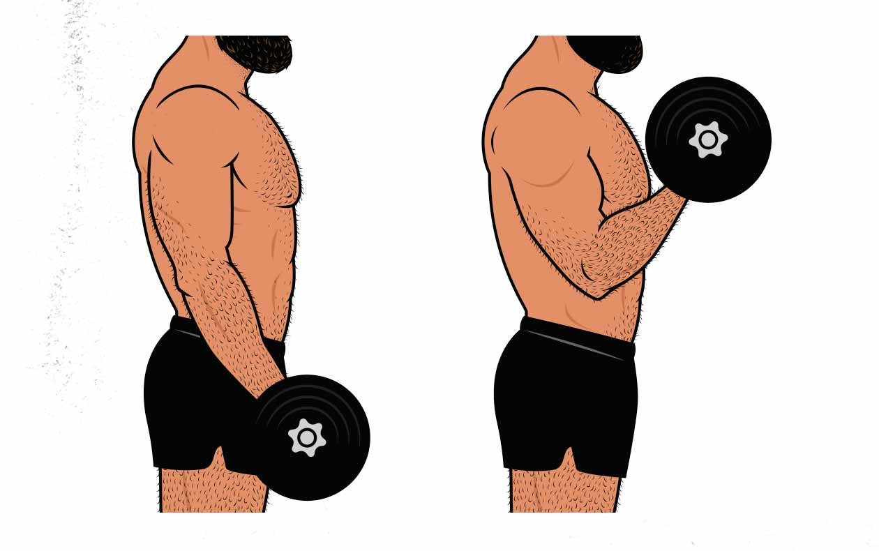 Illustration showing a bodybuilder doing a biceps curl while moving his elbow and shoulder.