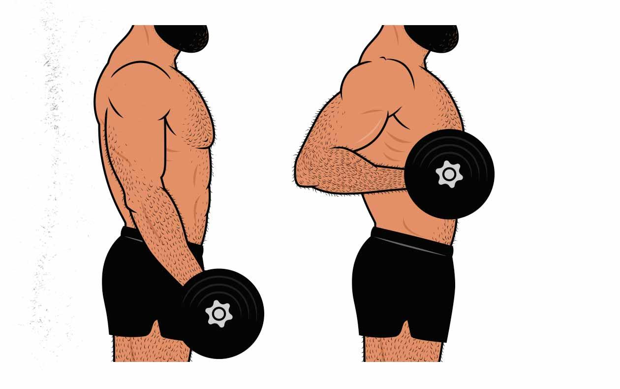 Illustration of a bodybuilder doing a drag curl for his biceps.