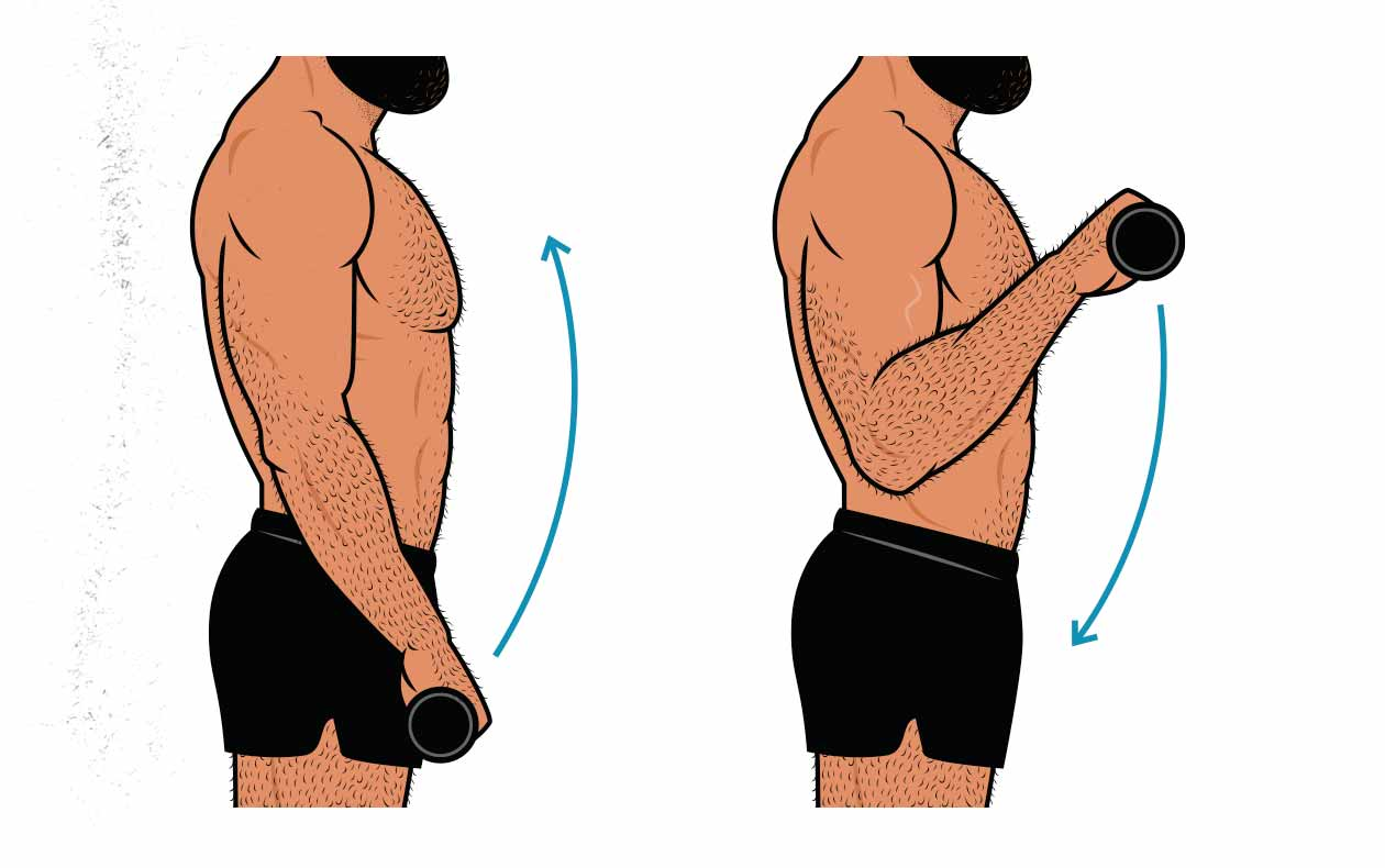 Illustration showing a bodybuilder doing a reverse curl for his brachioradialis muscles.