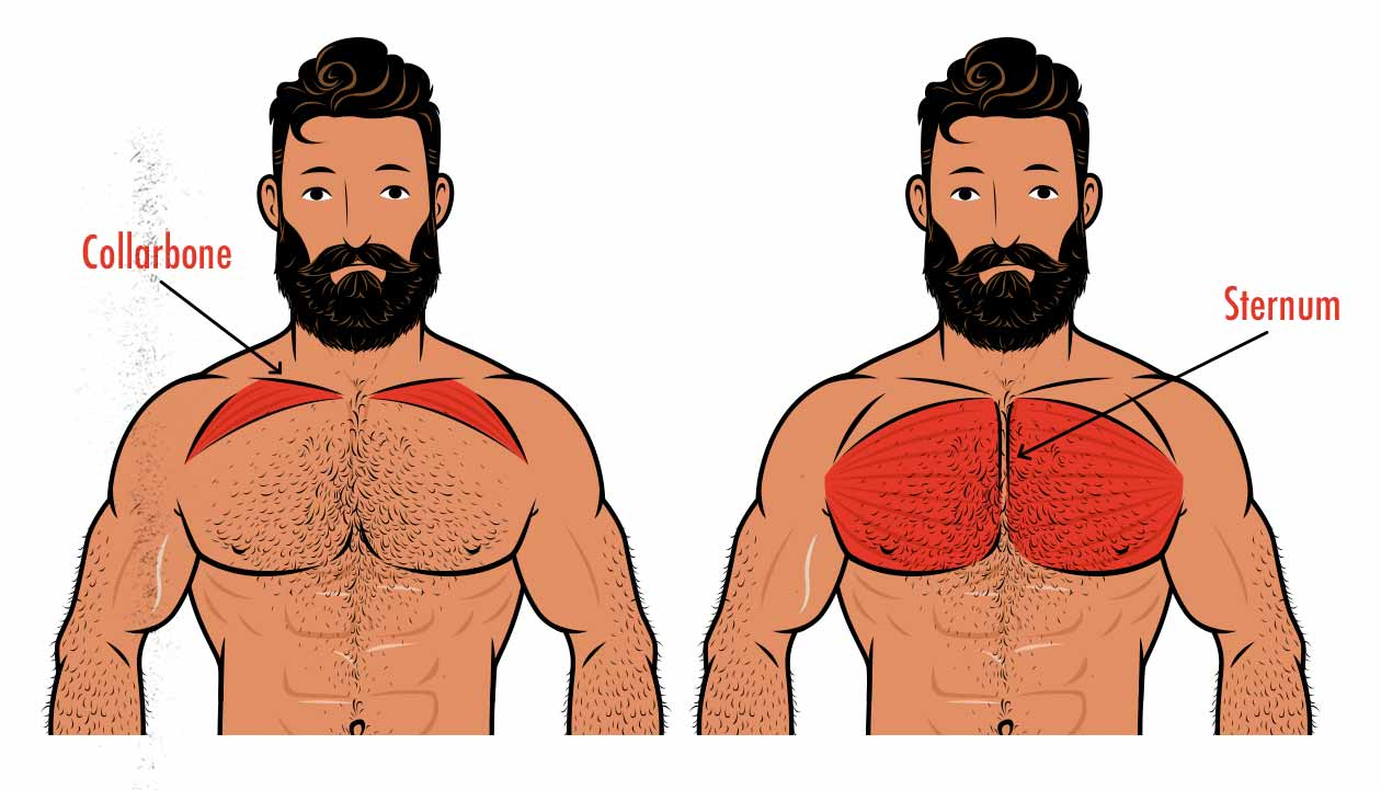 Diagram showing how the upper chest attaches to our collarbones (clavicles) whereas our mid and lower chest attaches to our sternums.