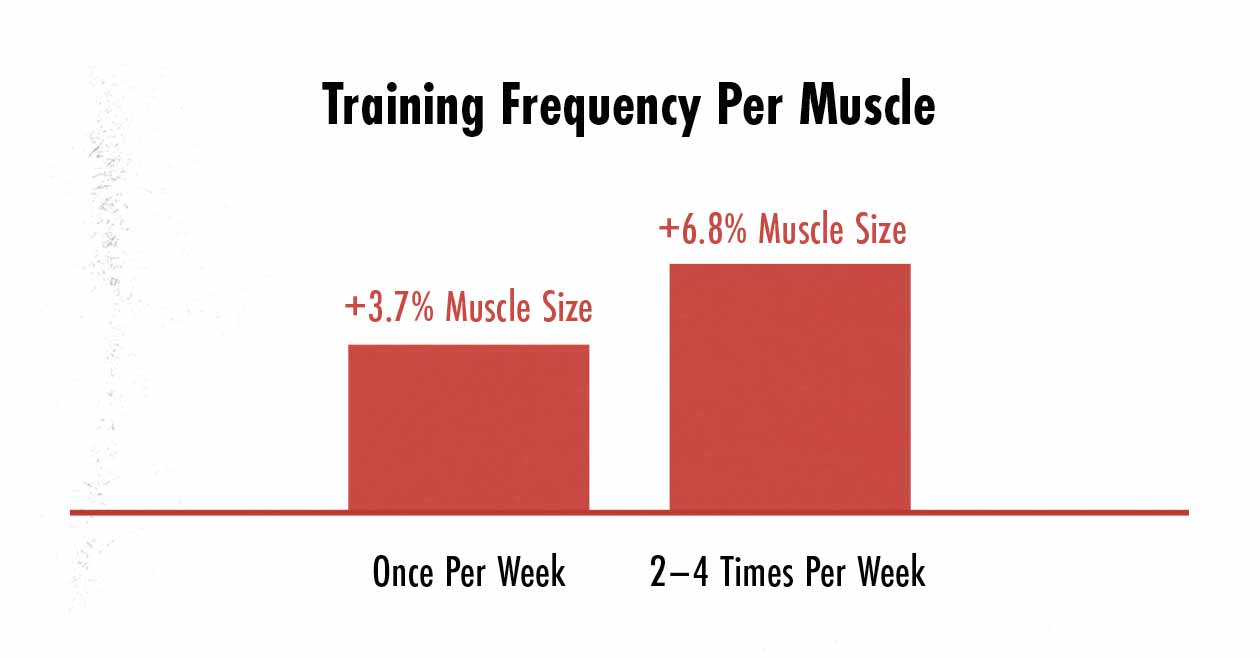 Graph showing that training our muscles 2–4 times per week is best for gaining muscle mass, making 4-day workout splits a great way to build muscle.