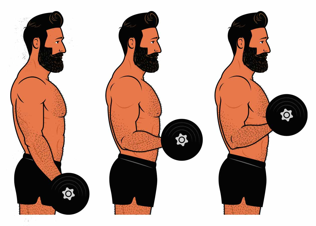 Illustration of a bodybuilder doing a biceps curl to demonstrate weight lifting tempo.