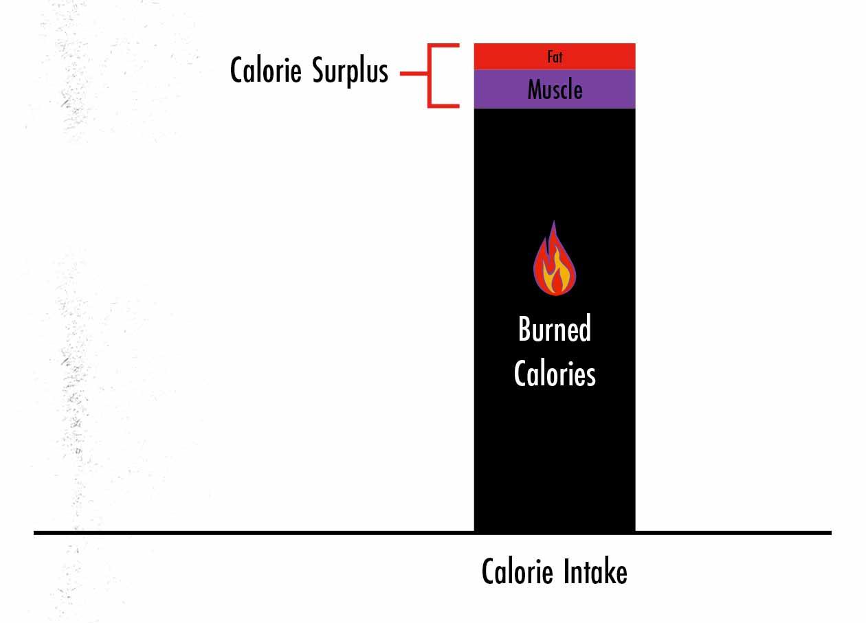 Graph showing that if we reduce our calorie surplus, we gain a little bit less muscle and much less fat.