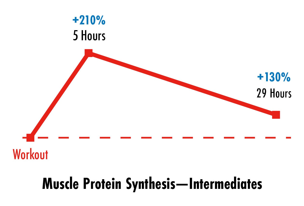 Graph showing that intermediates build muscle for a couple of days after working out.