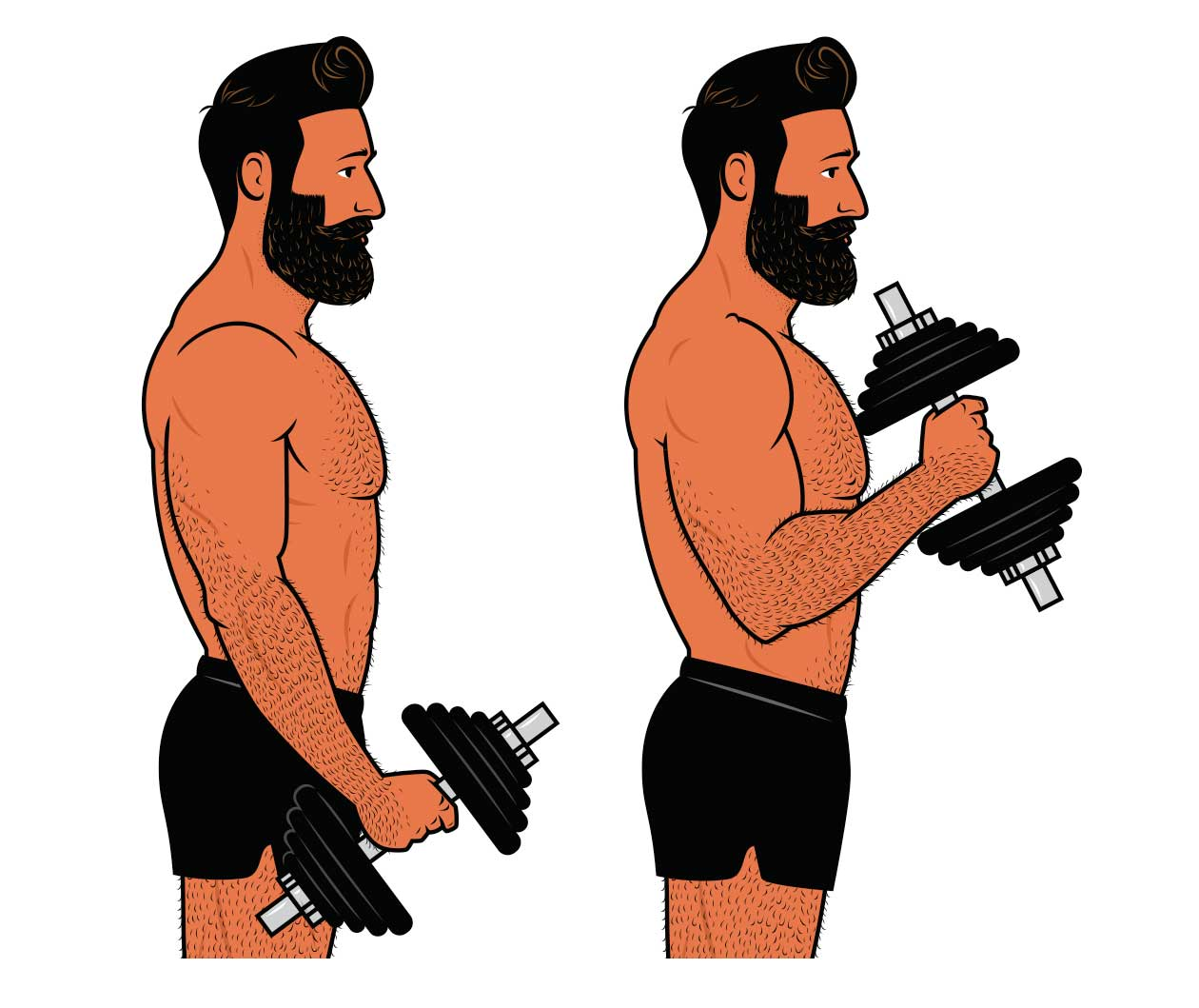 Illustration of a bodybuilder training his arms with hammer curls.