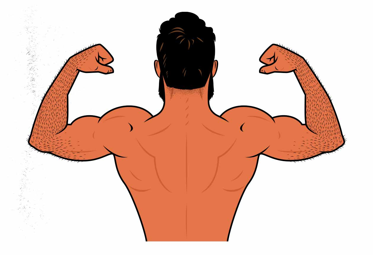 Illustration of a man flexing his upper back, lats, and biceps.