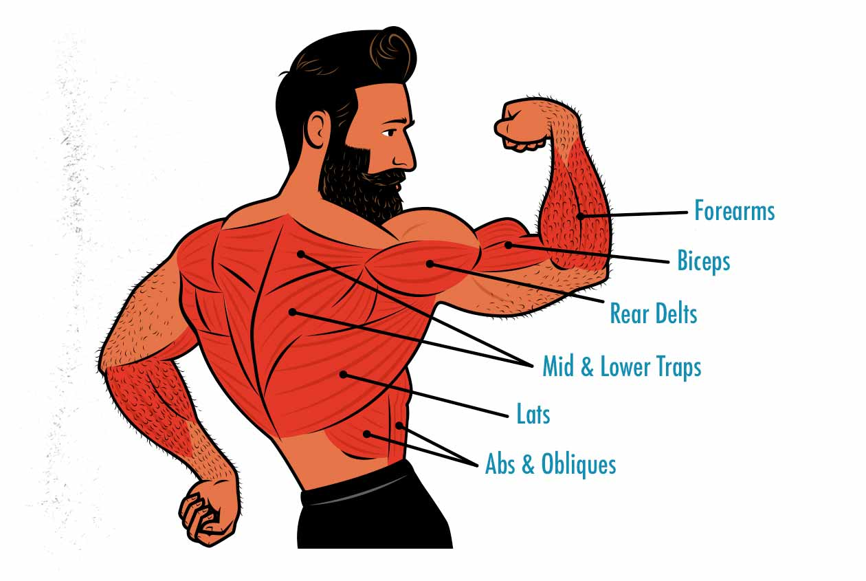 Diagrams showing the muscles worked by the lat pulldown.