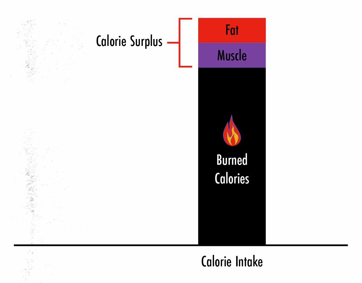 Graph showing the amount of muscle and fat gain while bulking.