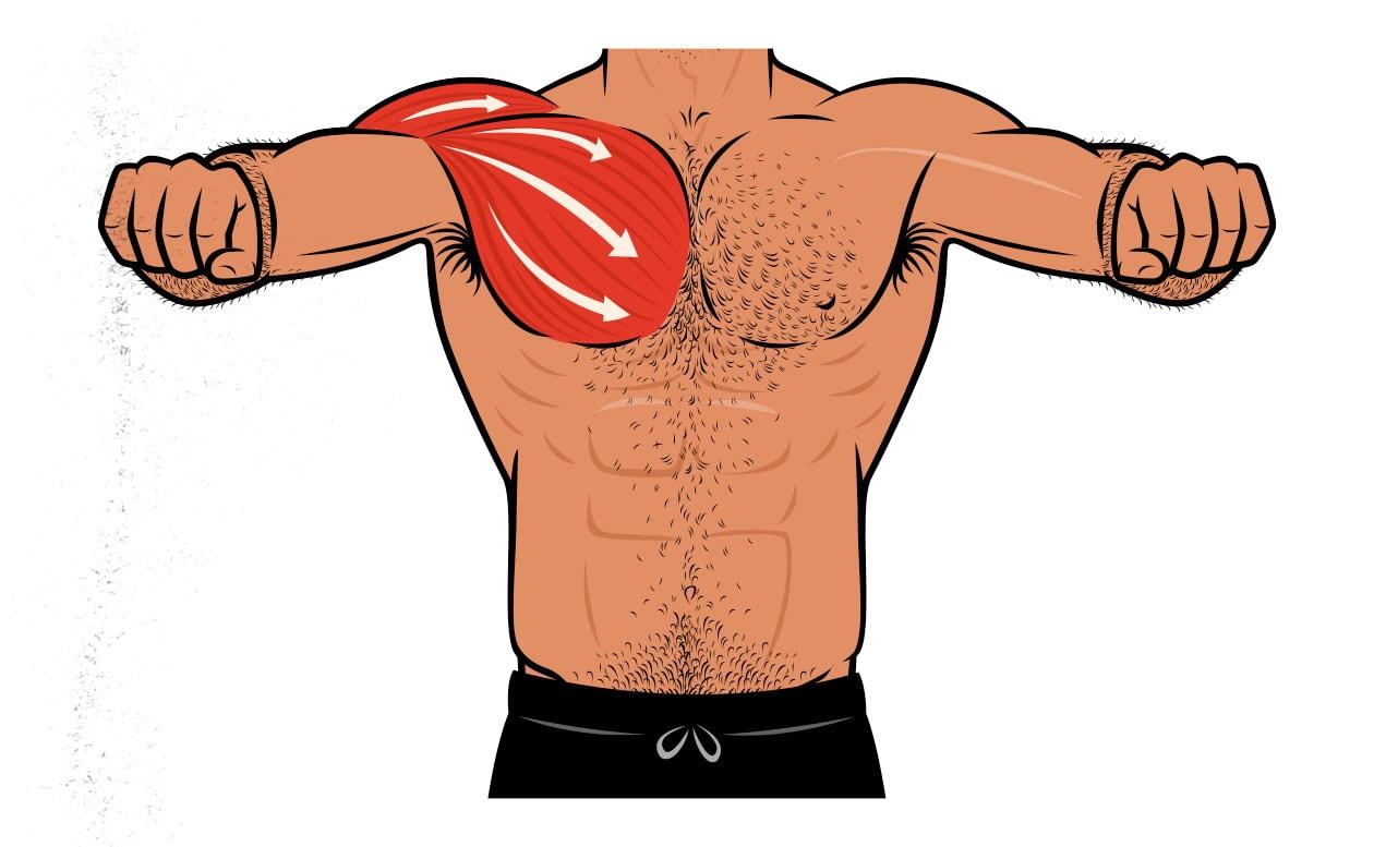 Ilustración que muestra que el press de banca es excelente para trabajar a los músculos del pecho.
