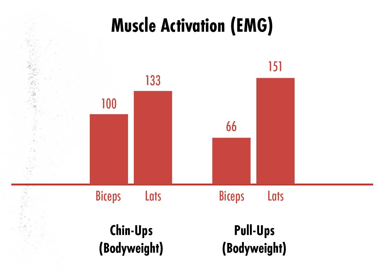 Graph showing the differences in muscle activation between chin-ups vs pull-ups, with chin-ups working the biceps harder and pull-ups working the lats harder.