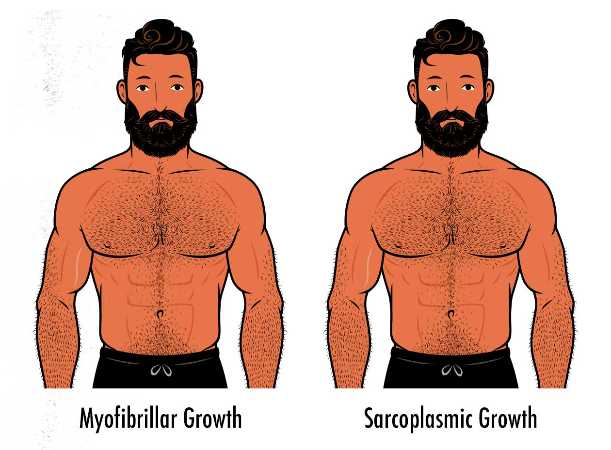 Illustration showing that sarcoplasmic and myofibrillar hypertrophy look exactly the same.