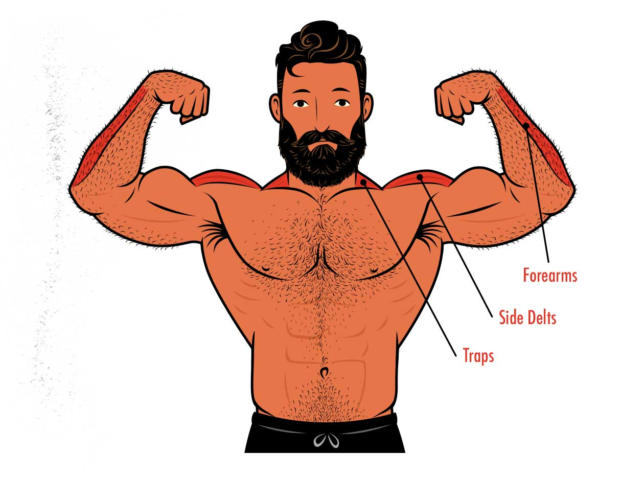Diagram showing the muscles worked by the lateral raise shoulder exercise.