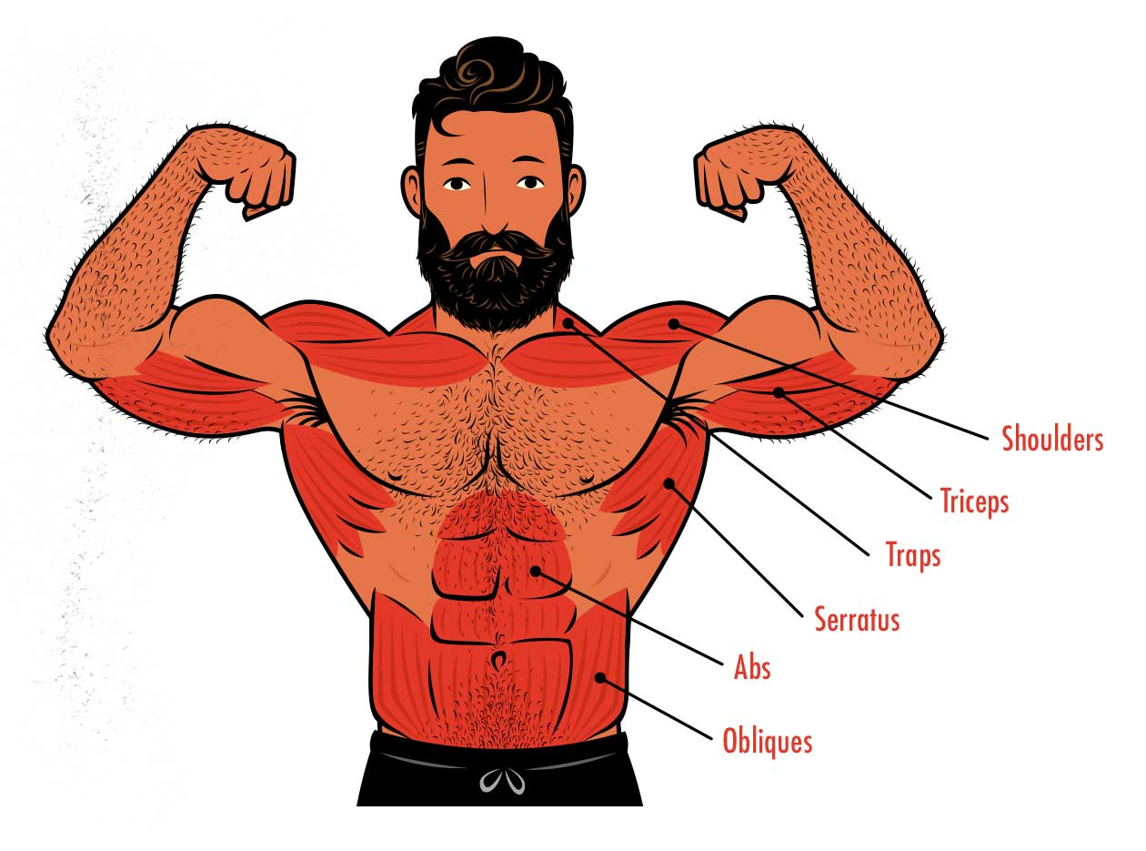 Diagram showing the muscles worked by the overhead press.