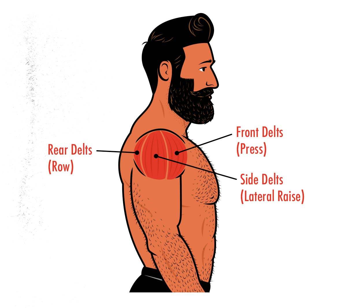 Diagram showing our shoulder muscles and how to train them.
