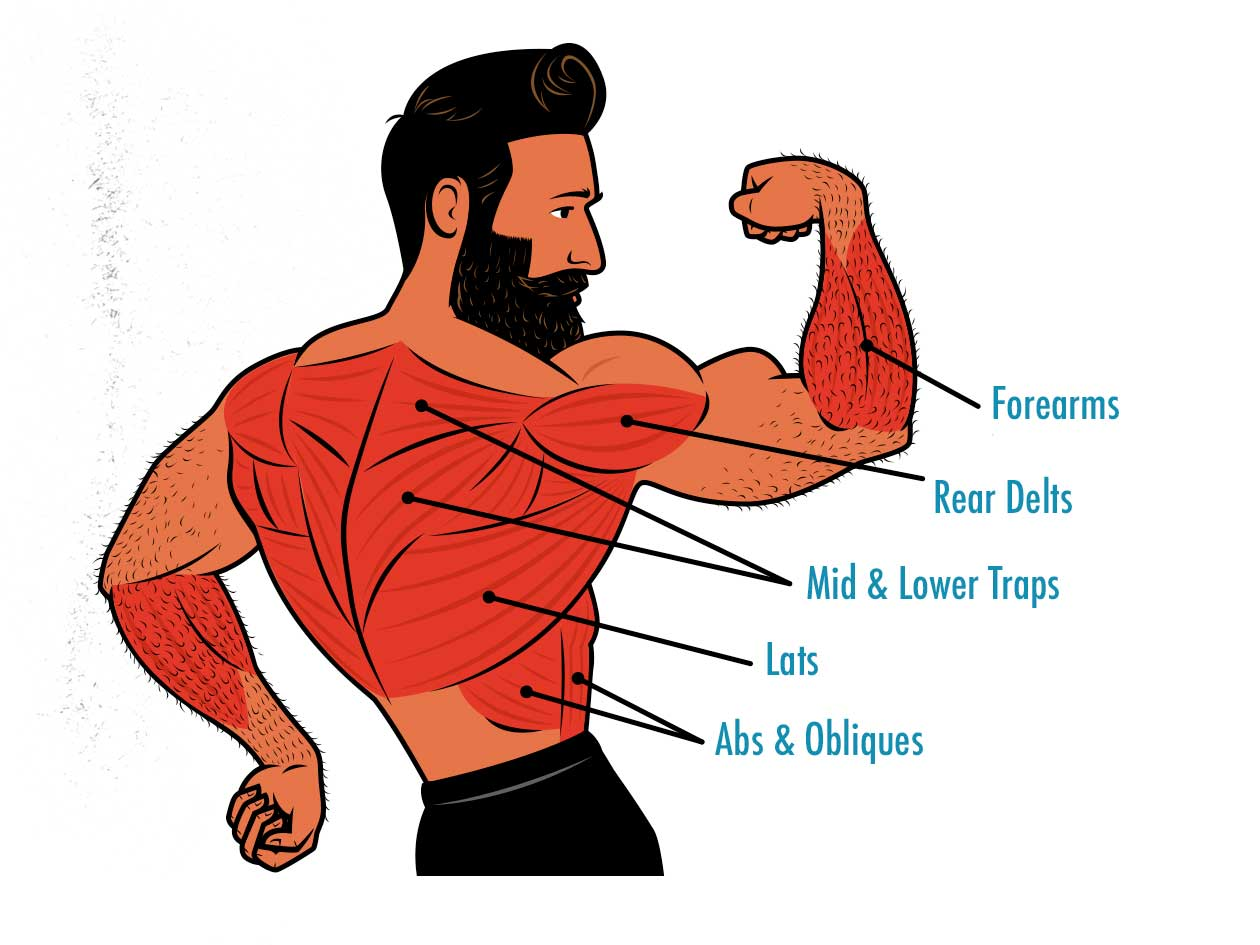 Diagram showing that chin-ups work more muscles than the pull-up.
