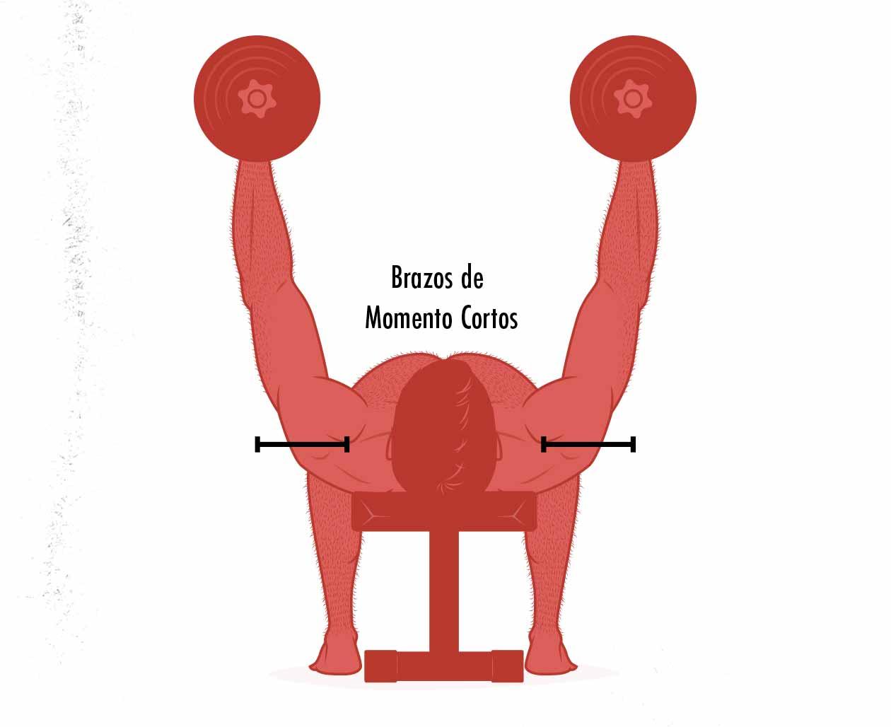 Ilustración mostrando cómo mantener la tensión en la parte alta de las aperturas de mancuernas.