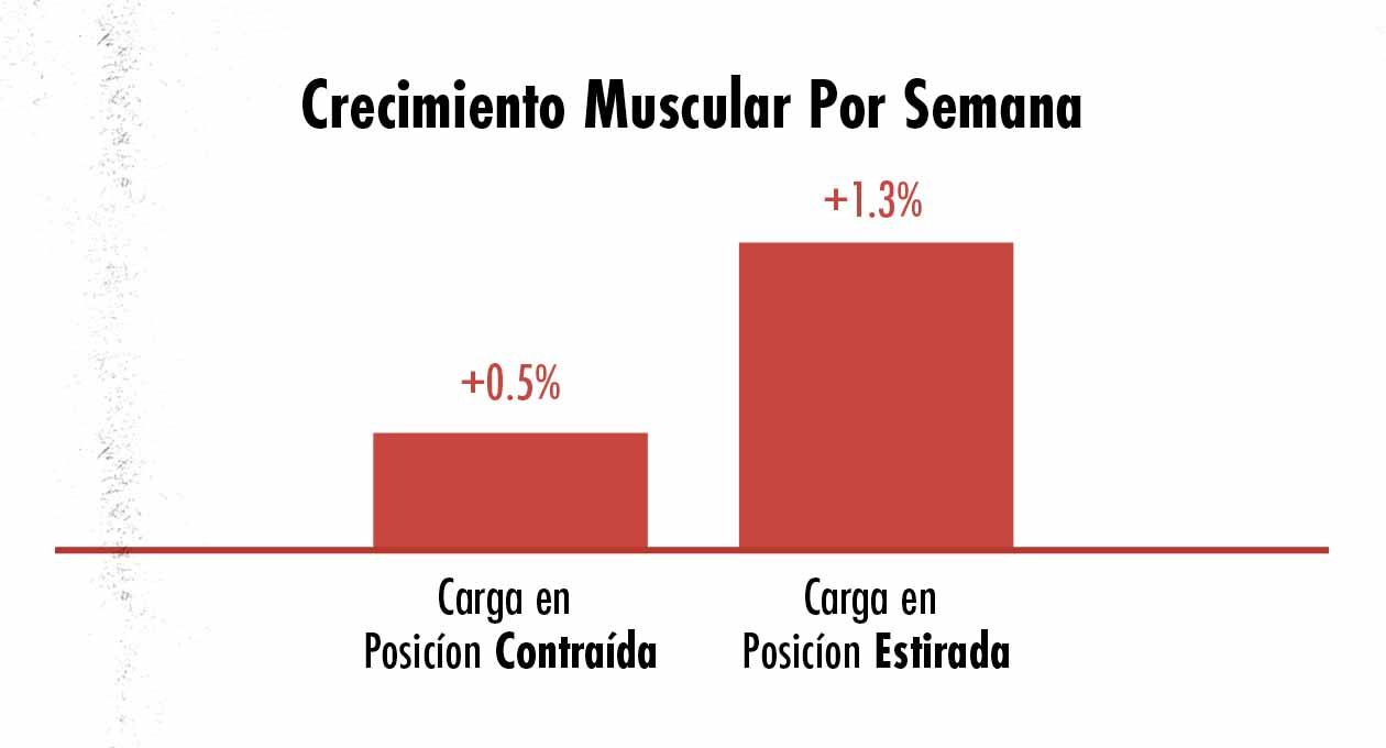 Gráfico mostrando la diferencia en crecimiento muscular al entrenar a los músculos en una posición contraída y estirada.