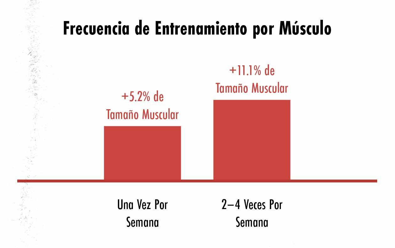 Gráfico que muestra que entrenar a un músculo de dos a cuatro veces por semana estimula más crecimiento muscular que sólo una vez a la semana.
