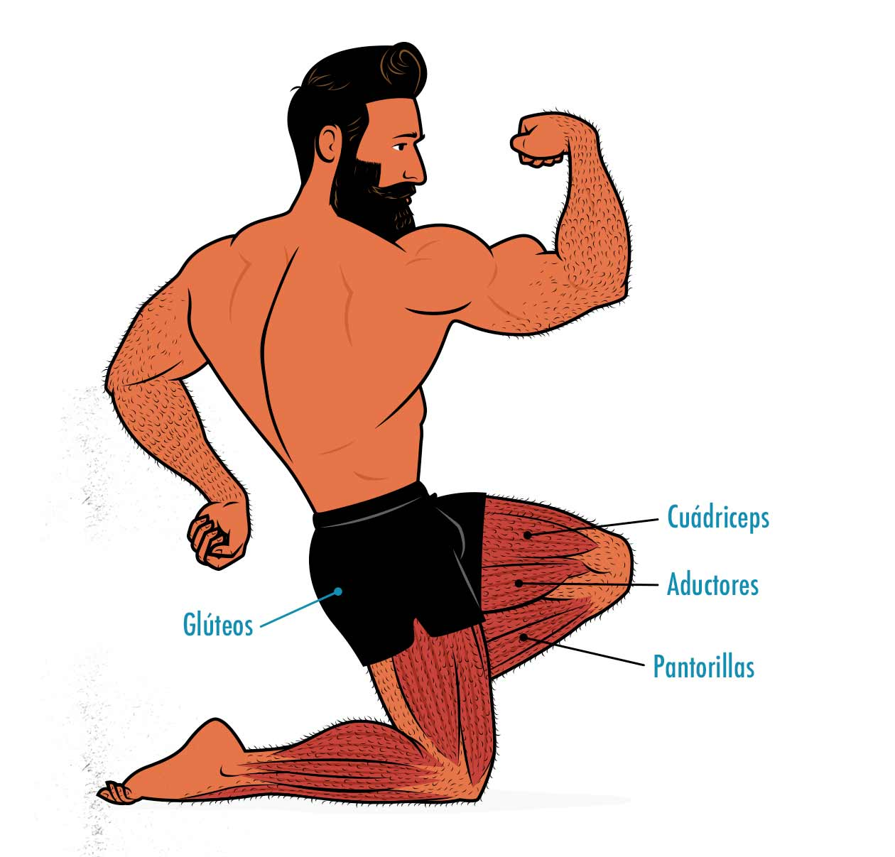 Ilustración de los músculos trabajados por las sentadillas con peso corporal.