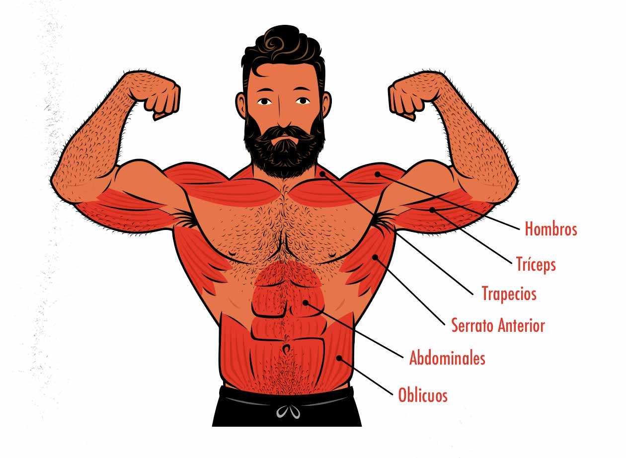 Ilustración de los músculos trabajados por el press de hombro por encima de la cabeza.