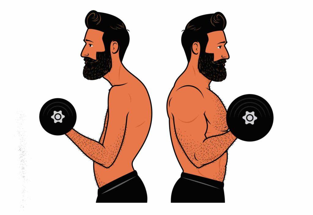 Illustration of a bodybuilder building bigger biceps by doing biceps curls.