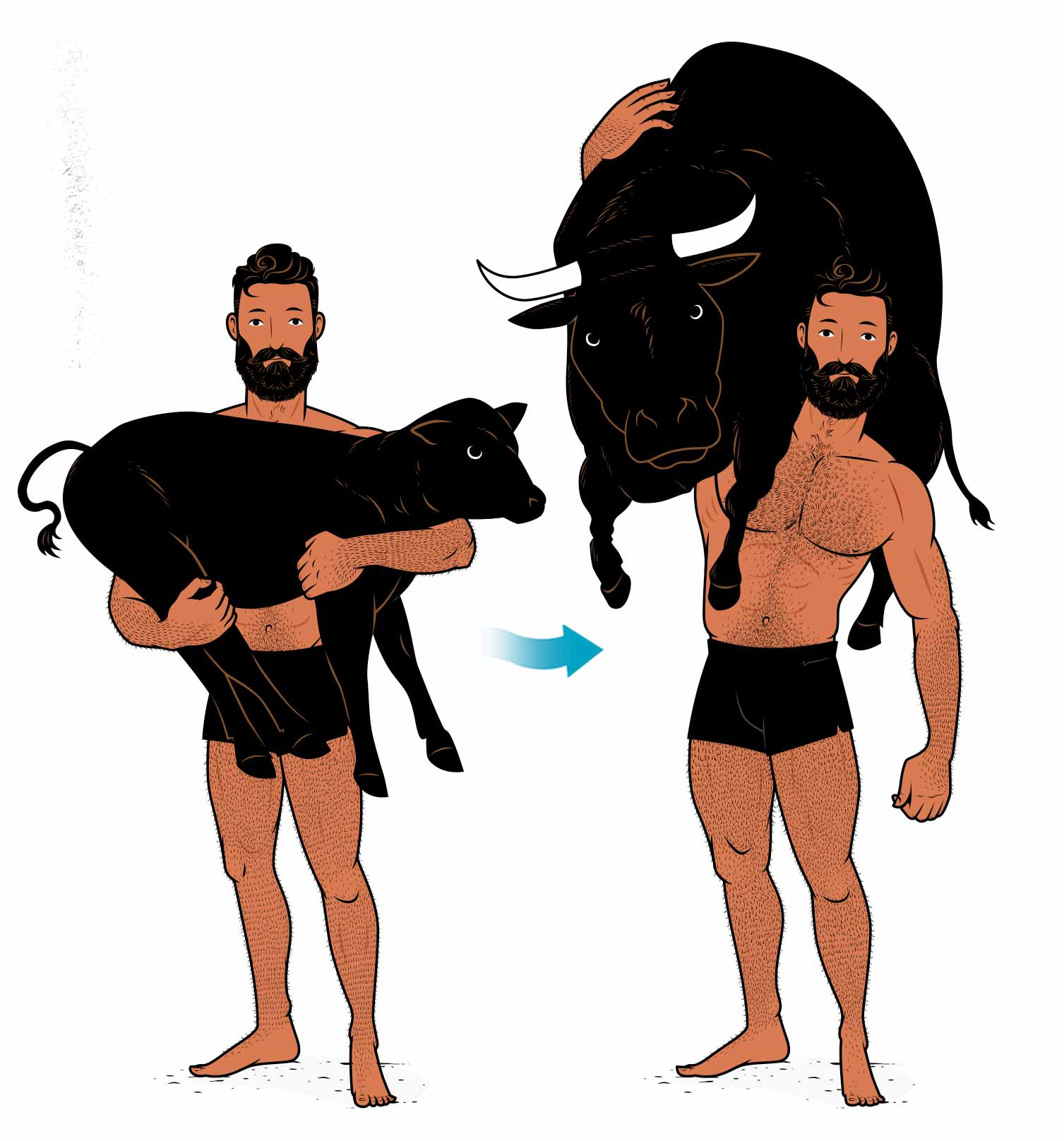 Illustration of Milo of Croton carrying a calf as it grows into a bull, demonstrating the principle of progressive overload for building muscle.